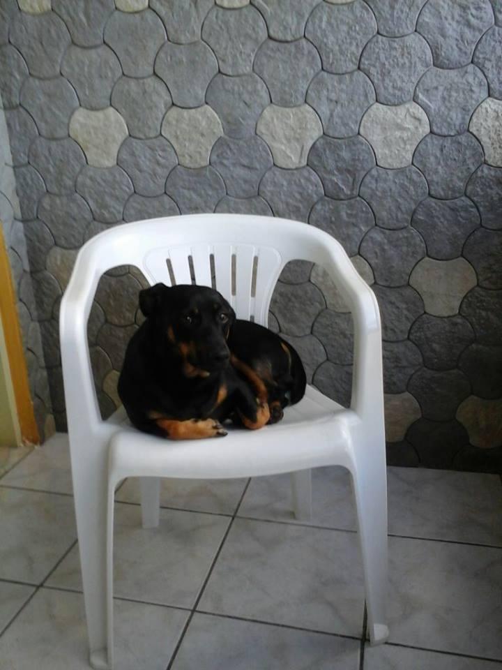 PINGO CÃO2