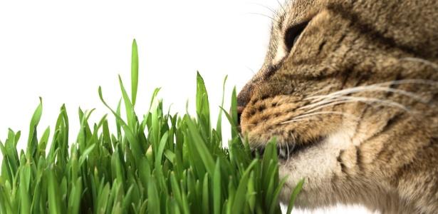 gato mato
